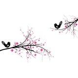 Blossom cherry Stock Photos