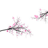 Blossom cherry Stock Image