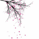 Blossom Cherry Stock Images