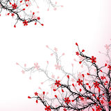 Blossom Cherry Royalty Free Stock Photos