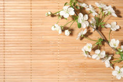 Blossom Cherry on background Royalty Free Stock Photos