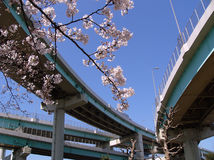 Blossom cherry branch in city. Blossom cherry (sakura) branch in city toll roads environment, Tokyo Japan Royalty Free Stock Photography