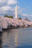 blossom cherry festival Στοκ φωτογραφία με δικαίωμα ελεύθερης χρήσης