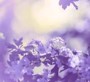 Blossom cherry Stock Photography