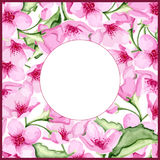 Blossom cherry frame Royalty Free Stock Images