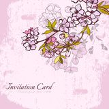 Blossom cherry or sakura invitation postcard Royalty Free Stock Photo