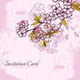 Blossom cherry or sakura invitation postcard Royalty Free Stock Photo