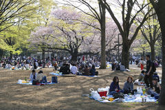 Blossom cherry season in Tokyo Stock Image
