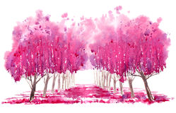 Blossom cherry tree alley. Stock Images