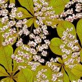 Blossom Chestnut Seamless Spring Background Stock Image
