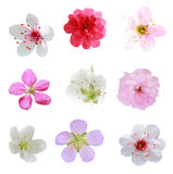 Blossom Collection Royalty Free Stock Image