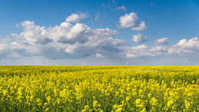 Blossom colza field and blue sky Stock Photos