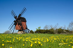 Blossom dandelions by a traditional windmill Stock Images