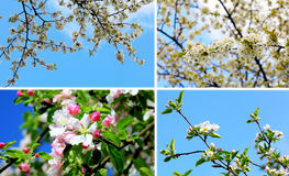 Blossom dream Royalty Free Stock Images