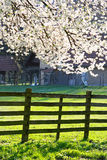 Blossom and fence Royalty Free Stock Image