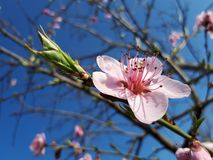 Blossom, Flora, Spring, Flower stock photography