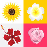 Blossom Flower Royalty Free Stock Images