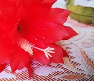 Blossom flower. Artistic look in vintage vivid colours. Royalty Free Stock Images