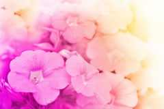Blossom flower on blur background Stock Photo