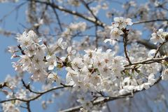 Blossom, Flower, Branch, Spring royalty free stock photos