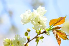 Blossom, Flower, Branch, Spring stock photos