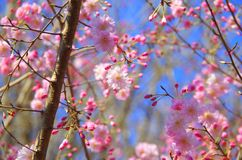 Blossom, Flower, Pink, Branch stock photography