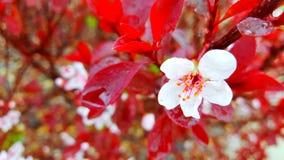 Blossom. Flower spring stock photo