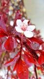 Blossom. Flower spring stock photos