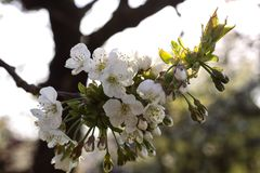 Blossom, Flower, Spring, Branch stock photos