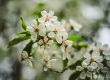 Blossom, Flower, Spring, Branch royalty free stock photography