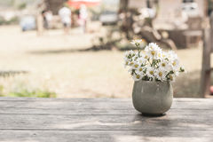 Blossom flower in vase on table. Royalty Free Stock Photo