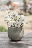 Blossom flower in vase on table. Stock Photo