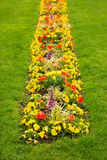 Blossom flowerbed in the lawn Royalty Free Stock Photography