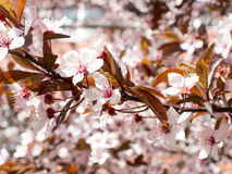 Blossom flowers on a branch. In the spring Stock Photos