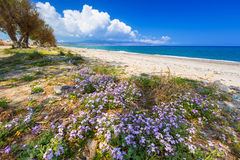 Blossom flowers at Maleme beach on Crete Stock Images