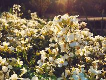 Blossom flowers. Sunset blossom flowers stock photography