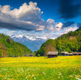 Blossom fold of flowers in swiss alps. Stock Image