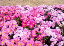Blossom garden. Flowers bloom covered field Stock Images