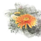 Blossom gerbera artistic floral abstract background. Illustration of blossom gerbera artistic floral abstract background. Watercolor painting retouch Stock Images