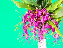 Blossom of globba flower ,chiangmai Thailand Royalty Free Stock Photos