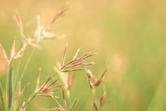 Blossom grass blur against green background with soft focus mini flowers in garden background.  stock photo