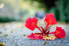 Blossom on the ground. Blossom flower drop on the ground Royalty Free Stock Photos