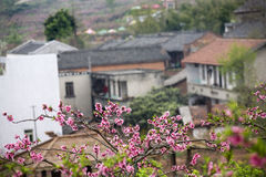 Blossom and houses Royalty Free Stock Image
