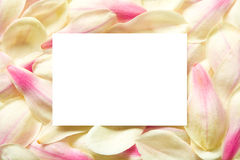 Blossom leaves frame Royalty Free Stock Images