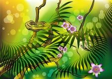 Blossom liana. The tropical liana blossoming in the morning jungle Royalty Free Stock Photo