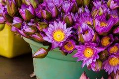 Blossom of lotus close up Royalty Free Stock Photos