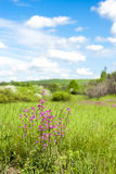 Blossom meadow Royalty Free Stock Photo