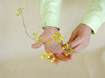 Blossom Offering Stock Photo