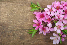 Free Blossom On Wood Royalty Free Stock Photo - 31704545