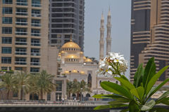 Blossom of palm tree over mosque Royalty Free Stock Photography
